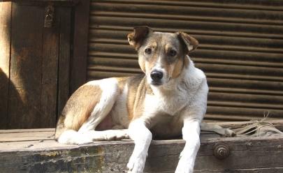 Campanha de apoio a animais de rua é lançada pela OAB de Goiás
