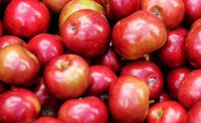 Pesquisador da UFG concluiu que agrotóxico penetra além da casca da maçã