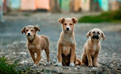 Câmara Legislativa do DF aprova o transporte de animais de estimação em ônibus e no metrô