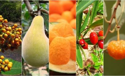 11 frutas do cerrado que todo mundo deveria conhecer