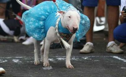 Cãocurso agitará o carnaval dos pets no Taguatinga Shopping em Brasília