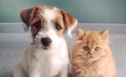 Governo do Distrito Federal promove vacinação gratuita para cães e gatos