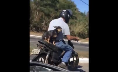 Cachorrinha é flagrada andando de moto em... Goiânia!