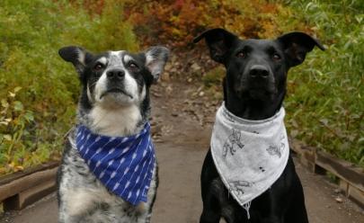 Feira para adoção de cães adultos acontece neste fim de semana em Uberlândia