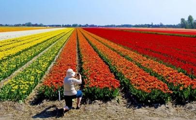 Festival de Flores de Holambra chega a Goiânia com mais de 250 espécies