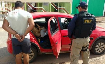 Motorista é preso em Goiás por dirigir bêbado transportando porco em cadeirinha de bebê