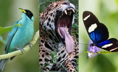 De arquiteta para fotógrafa de animais selvagens em Brasília