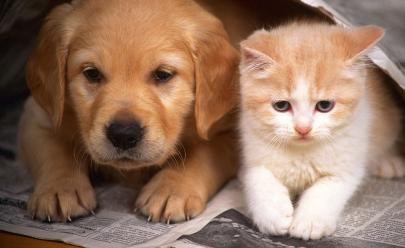 Pier 21 recebe Feira de Adoção de Cães e Gatos em Brasília
