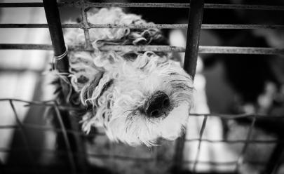 O que podemos aprender com a Austrália para acabarmos com a crueldade animal?