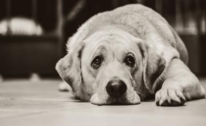 Hoje é o dia mais triste do ano, segundo pesquisa