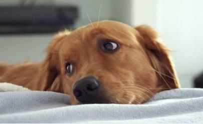 A internet está se derretendo com a história do cachorro que não dormia à noite