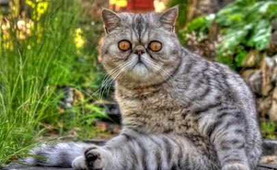 Encontro de gatos acontece pela primeira vez em Goiânia com entrada gratuita