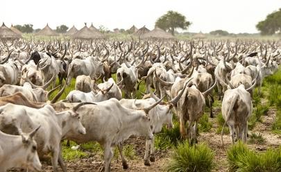 Goiás tem três vezes mais gado que gente, segundo pesquisa