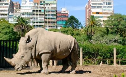 Zoológico de Buenos Aires será fechado e animais serão devolvidos à natureza