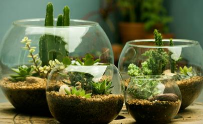 Goiânia recebe exposição demini jardins e terrários