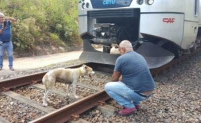 Maquinista salva cadela que estava amarrada nos trilhos do trem