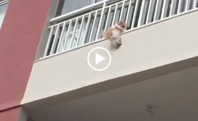 Vídeo: assustada com fogos, cachorrinha pula de prédio e é salva por vizinhos