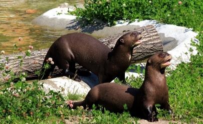 10 animais silvestres que você só encontra visitando o cerrado