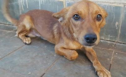 Feira de adoção de animais acontece nesse domingo em Goiânia
