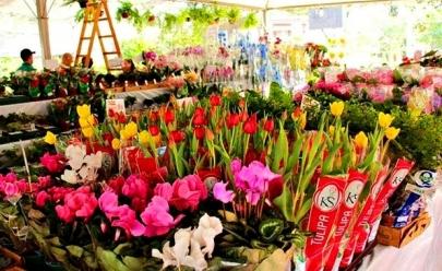Goiania recebe Festival de Flores de Holambra