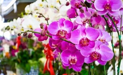 Feira em Brasília traz mudas de orquídeas a partir de R$5 e curso de cultivo no Dia dos Pais