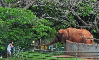 Zoológico de Brasília abre as portas para visitas guiadas e caminhadas noturnas