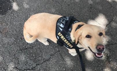 Pela primeira vez a Polícia Militar vai adestrar cães de graça em Goiânia