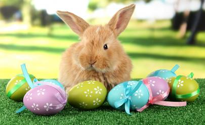 Por que o símbolo da páscoa é o ovo e o coelho?