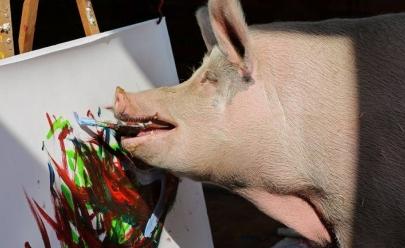 Porca pintora Pigcasso é destaque no mundo da arte e teve obra vendida por R$ 15 mil