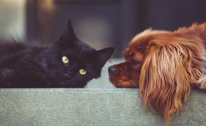 Gatos vs Cães: Segundo estudo, amantes de gatos são mais inteligentes que amantes de cachorro