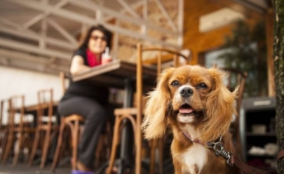 5 restaurantes pet friendly em Brasília