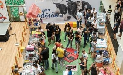 Shopping do DF recebe feira de adoção de pets