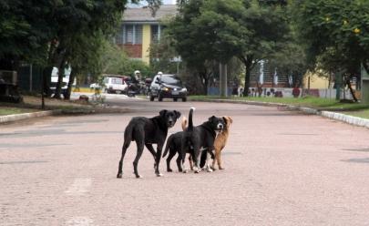 Prefeitura de São Leopoldo é flagrada abandonando animais