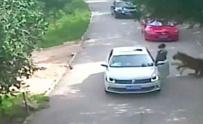 Mulher morre e outra fica ferida em ataque de tigres em zoológico na China; veja o vídeo