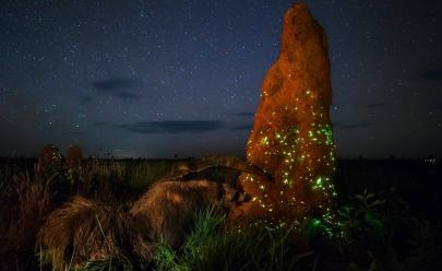 Fotografia tirada no Parque Nacional das Emas rende prêmio internacional a fotógrafo brasiliense
