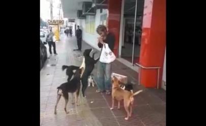 Pedinte usa dinheiro de esmola para comprar comida para cachorros de rua em Goiânia