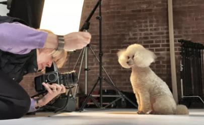 Ensaio fotográfico mostra como os cães envelhecem; as imagens são profundas e comoventes