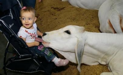 Domingo tem programação especial para toda a família na Pecuária, em Goiânia