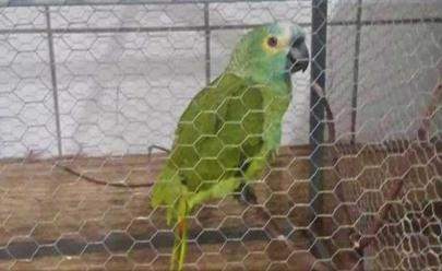 Papagaio grita 'Mamãe, polícia' e é apreendido pela PM em ponto de tráfico