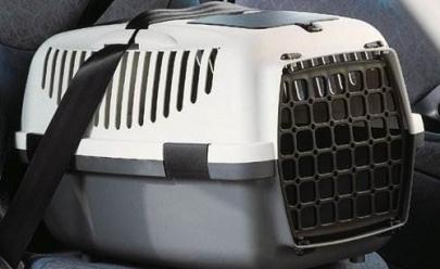 Animais devem usar caixas e cinto de segurança ao passearem de carro