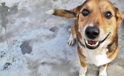 Brasília recebe feira de adoção de pets e oferece nova vida aos bichinhos
