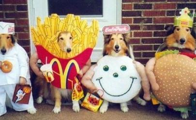 Goiânia recebe primeiro concurso de fantasias para pets