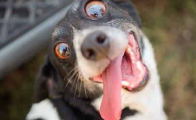Saiba por que agosto é conhecido como o 'Mês do Cachorro Louco'