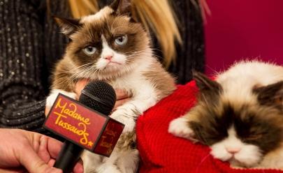 Morre Grumpy Cat, a gatinha mais rabugenta da internet