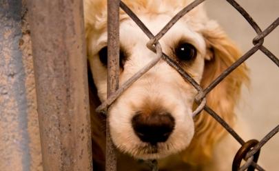 Projeto de Lei que multa em até R$ 200 mil quem maltratar animais é aprovada em Goiânia