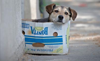 Virmondes quer proibir eutanásia de cães e gatos saudáveis em Goiás
