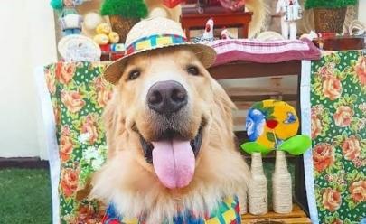 Beco da Codorna recebe festa julina para pets neste sábado em Goiânia