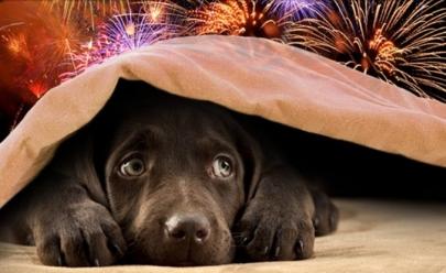 Prefeito cancela fogos do réveillon para proteger animais do barulho