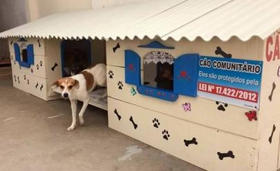 Voluntários criam Cãodomínio para animais de rua e imagens viralizam na web