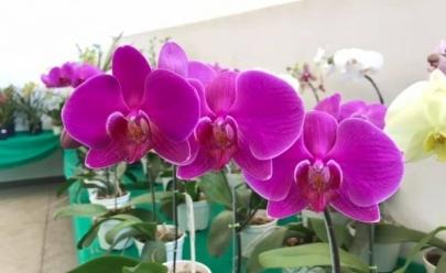 Uberlândia recebe mais uma edição da Exposição de Orquídeas